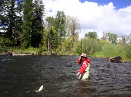 Mckenzie river fishing report mckenzie river fly fishing for Mckenzie river fishing
