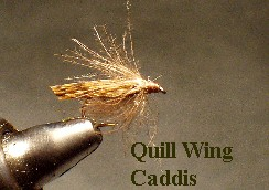 Quill Wing Caddis / mckenzie river fly fishing / mckenzie river flies