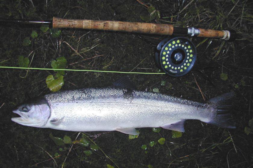 steelhead fly patterns, photos, steelhead flies, steelhead fly, Fly Fishing Bait